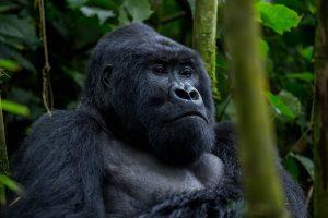 3 days gorilla tracking bwindi